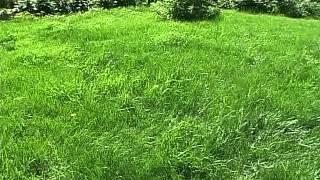 Валерий Панов: Какая газонная трава самая медленно растущая?(, 2016-01-28T04:28:24.000Z)