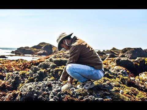 Coastal Foraging For Beginners: EASIEST Shellfish To Forage! + Making RISOTTO