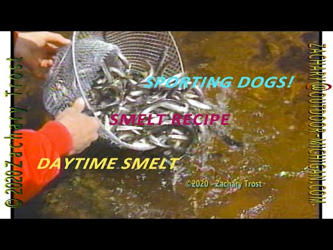 Daytime Smelt Dipping Michigan UP - Sporting Dogs - Fishing - Smelt Recipe 1998-03-26