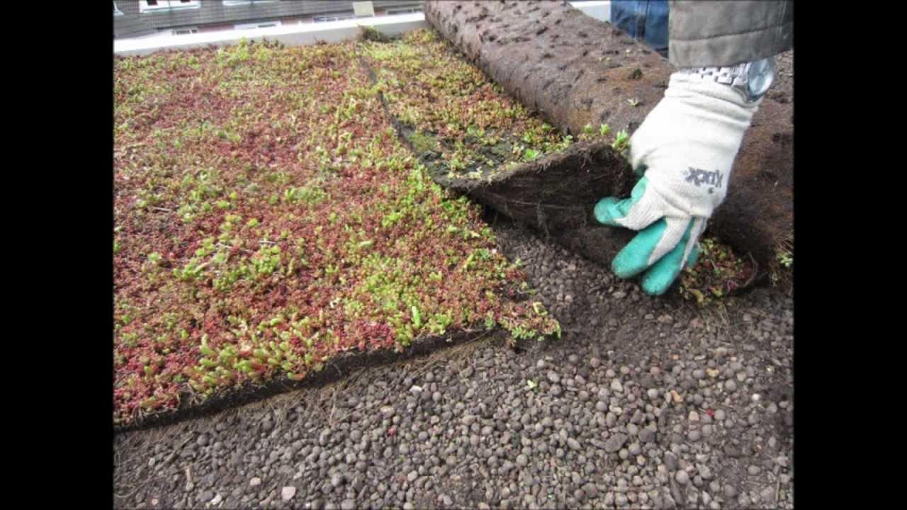 Dakenshop tuindak groendak witte daken en toch groen epdm dak mos dakbedekking sedum - Daken en volumes ...
