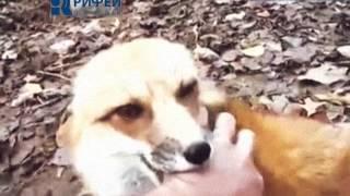 Опасность диких животных  Бешенство