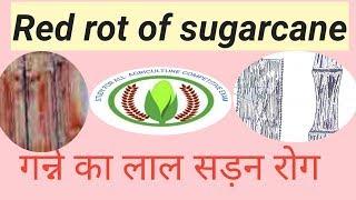 Red rot of sugarcane
