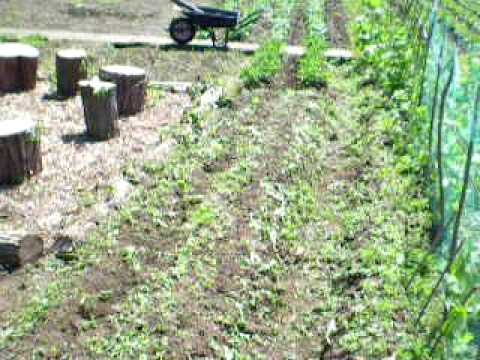 The Cornwallis Coop Allotment