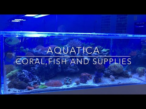 Aquatica - Fish, Corals & Supplies