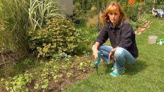 Новая грядка. Улучшение почвы. (ч.2)