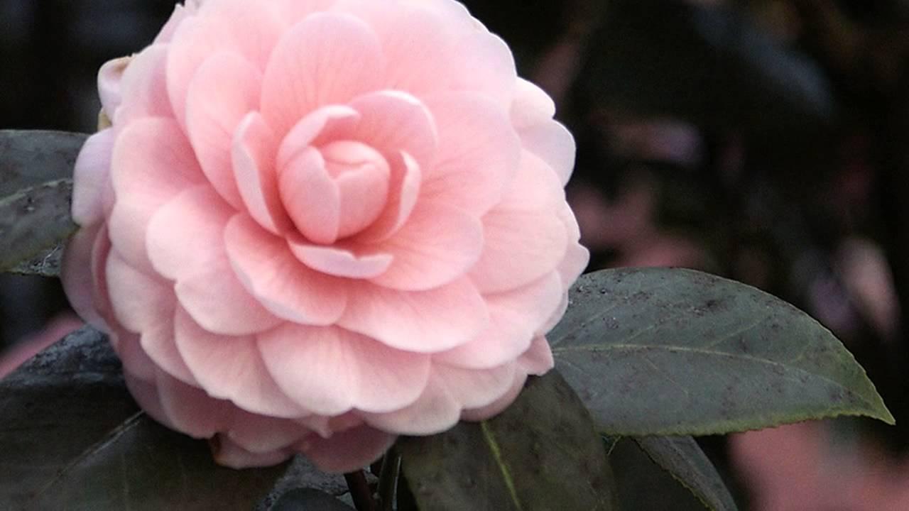 Посмотреть цветок