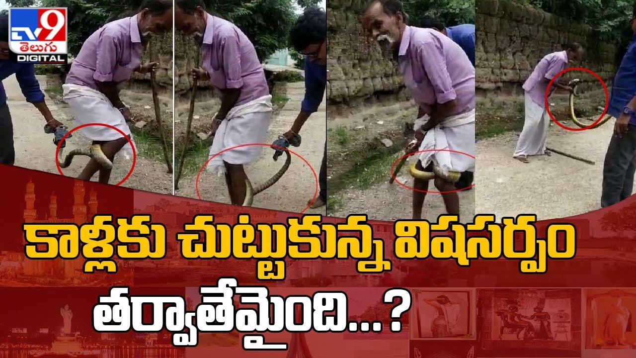 గన్నేరువరంలో భారీ విషసర్పం కలకలం - TV9