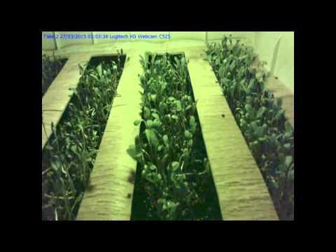 Alfalfa Ormus Time Laps