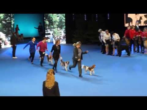 Kennel Bullbenz BOB-breeder @ Helsinki Winner show 6th Dec 2014