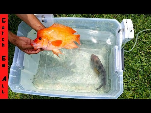 FISH BATTLE in Plastic Tub!