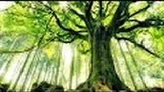 Мистические тайны растений.Зелёный разум планеты.Обманутые наукой . .