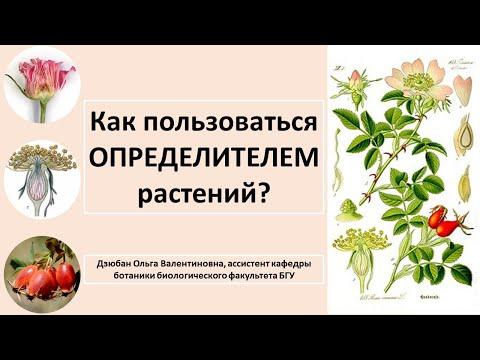 Как определить растение