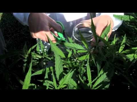 BBF Basic supplies for Cannabis tissue culturing