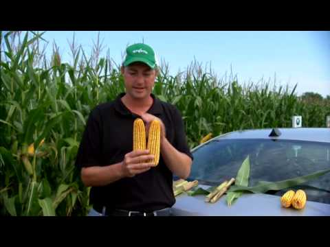 Quilt Xcel Fungicide Early (V4-V8) Benefits Corn - YouTube : quilt xcel fungicide - Adamdwight.com