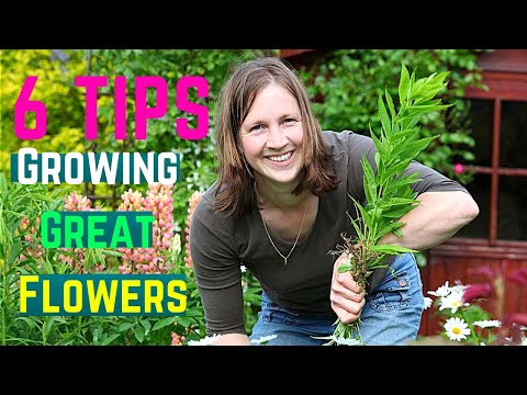 6 Tips for Growing Great Flowers