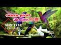 Suara Pikat Burung Kolibri Cocok Buat Masteran Atau Terapi  Mp3 - Mp4 Download