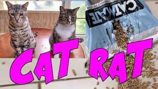 CAT RAT  THUG LIFE