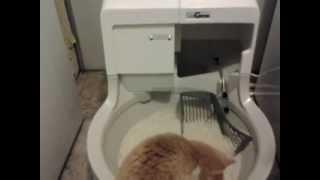 Кот играет со своим новым автоматическим лотком  CatGenie