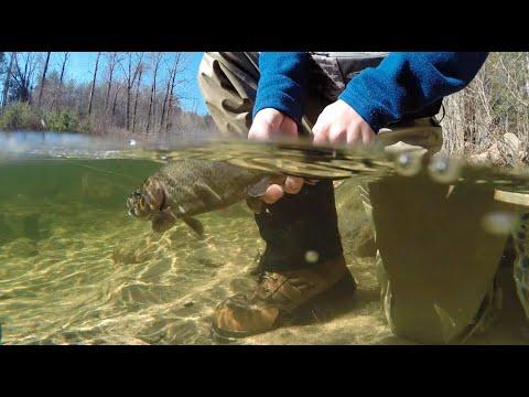 Remember November - Fly Fishing North Carolina