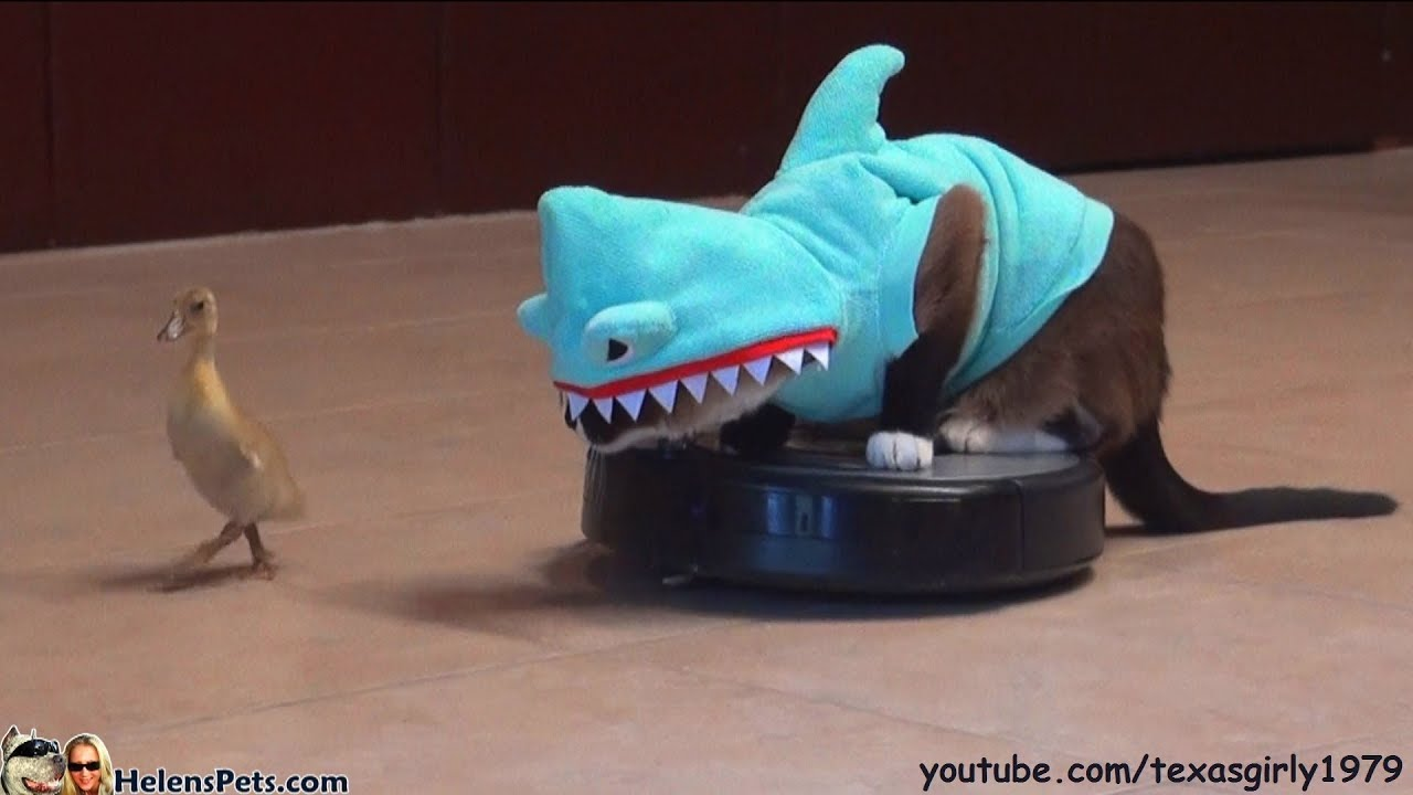 Shark Cat The Song Youtube