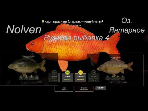 Русская рыбалка 4\Озеро Янтарное\Карп Линейный\Карп Чешуйчатый\Карп красный Старвас-Чешуйчатый\фарм