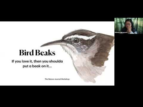 How To Draw Bird Beaks