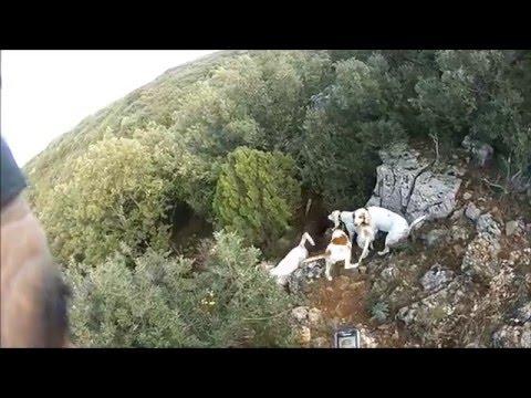 Battue Aux Sangliers à Orsan Gard 2015/2016