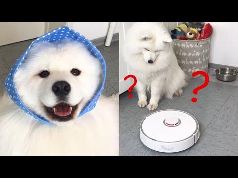 Dog vs. Robot Vacuum I Roborock S5