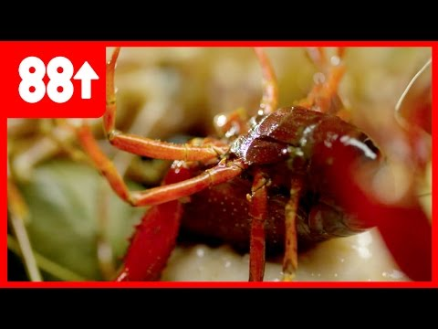 Cooking Korean food with live seafood !  | Seoulfood
