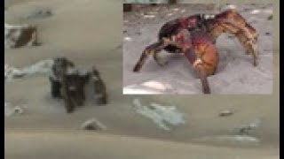 Mysterious Crab Monster Found on Mars!