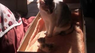 子猫にお気に入りの毛布を汚されてしまい 怒っているミーちゃんです。