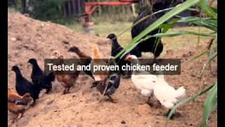 Chicken Feeders | hens |San Mateo |CA | automatic chicken feeder | feeding chickens |poultry feeders