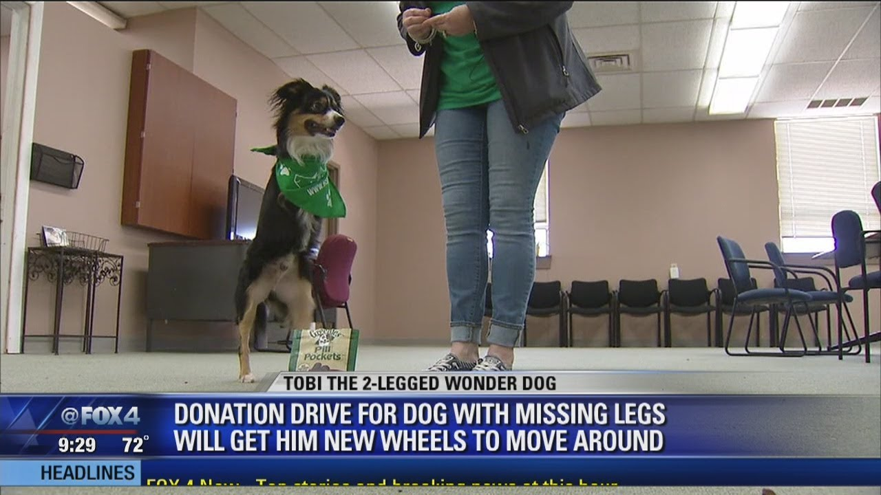 Donations pour in to help Tobi the two-legged dog get new ...