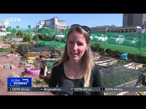 Urban Agriculture Provides Jobs For Cape Town's Homeless
