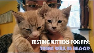 Testing Kittens for FIV: There Will Be Blood thumbnail