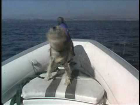 Dog leads WILD DOLPHINS to safety