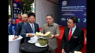 Frozen durian exports to China to reach 1,000 metric tonnes monthly