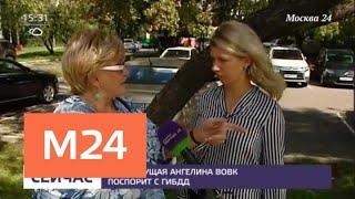 Смотреть видео Телеведущая Ангелина Вовк прокомментировала обвинение ДТП - Москва 24 онлайн
