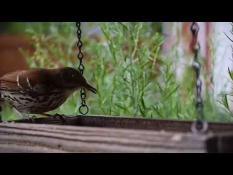Missouri backyard birds - YouTube