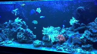 My Self Built Saltwater 130 Gallon Reef Tank