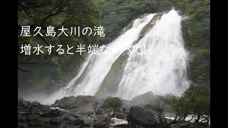 屋久島大川の滝半端ないって!日本の滝百選、落差88m。