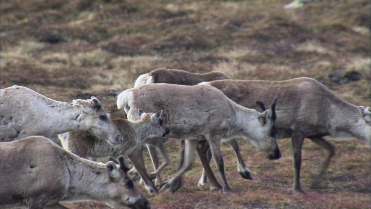 BBC млекопитающие