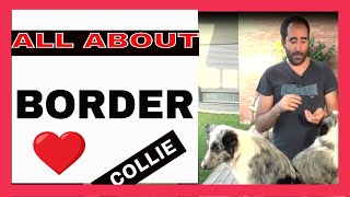 ✅ Dog breeds, the BORDER COLLIE ,  things YOU DON'T KNOW