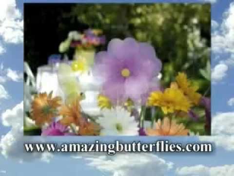 Amazing  Weddings  Butterfly Release