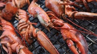 your lobster is really expensive heres why