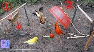 Chế Tạo MÁY CHÉM ĐẦU Bẫy Chim Chào Mào Bằng Rỗ . Bẫy Chim Đơn Giản . Amazing Best Bird Trap
