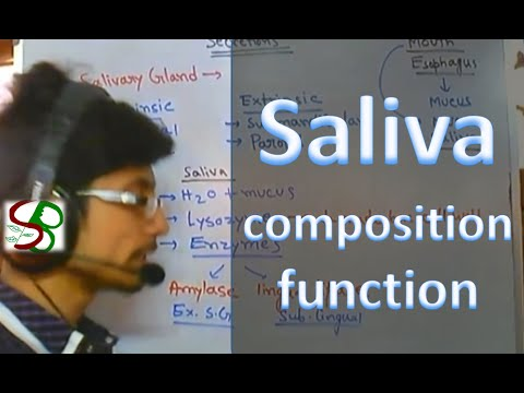 Saliva - enzymes in saliva
