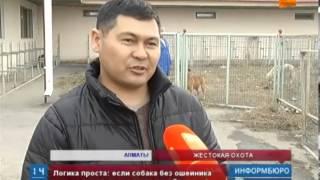 Ежегодно ветслужбе Алматы приходится усыплять около 45000  собак