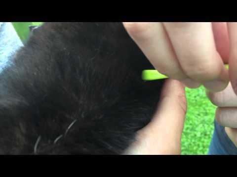 Zecken bei Hund und Katze vollständig entfernen mit dem O'Tom Zeckenhaken