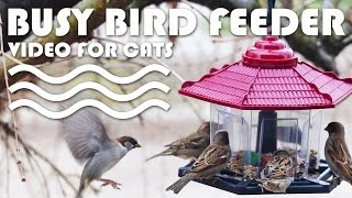Entertainment Video For Cats. Bird Feeding Frenzy. Lots Of Fluttering Wing Action!